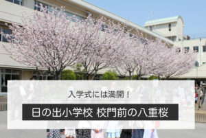 hinode-sakura